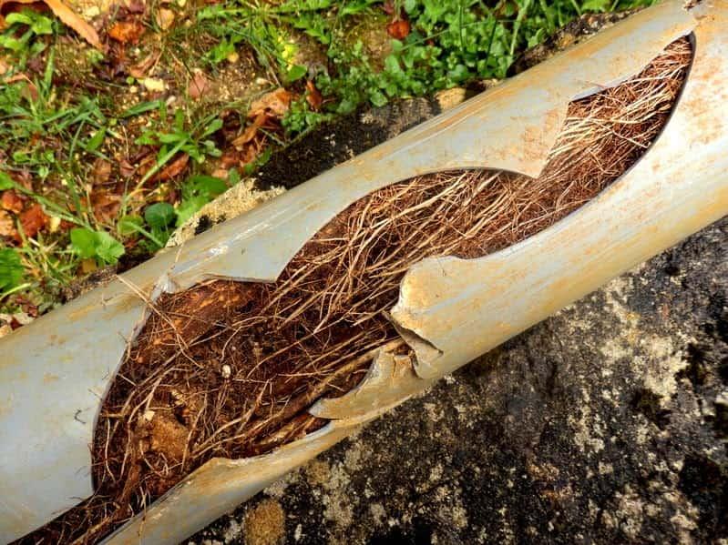 6-tree root invasion (1)-min